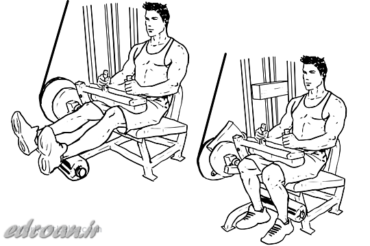 Seated_Leg_curl
