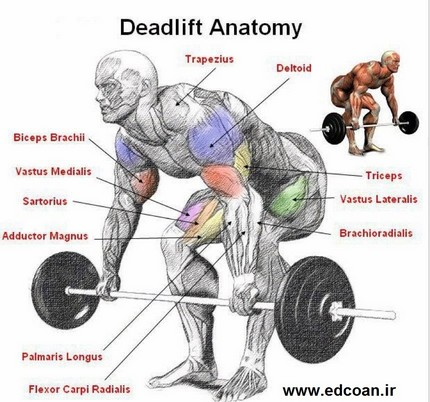 deadlifts-big-muscles